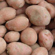 Patate rosse, 1 euro al kg